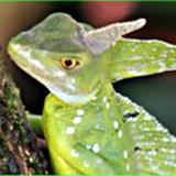 http://www.midgardserpents.webs.com